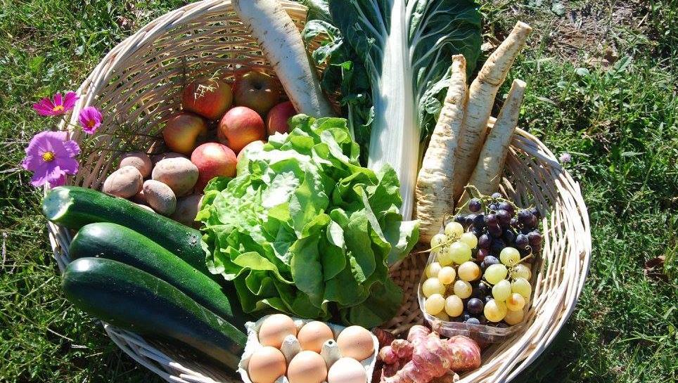 panier-legumes-ferme-de-noe.jpg